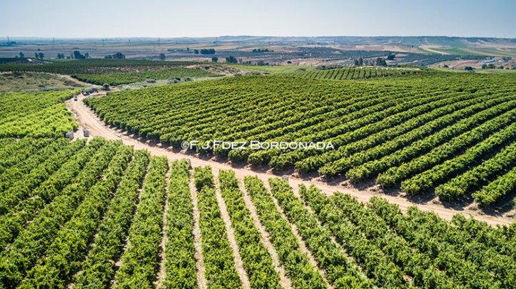 filmacion-aerea-agricultura2