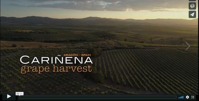 VIDEO-AEREO-AGRICULTURA-VENDIMIA